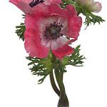 Anemone Light Pink