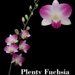 PLENTY FUCHSIA