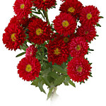 Red Asters