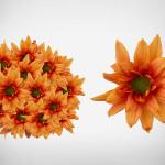 daisy amber