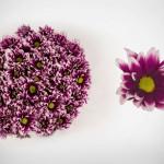 purple orinoco