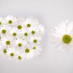 white atlantis