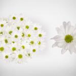 white monalisa