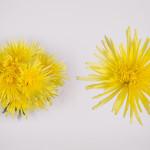 yellow delistar