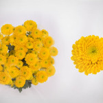 yellow paintball