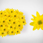 yellow sunny reagan