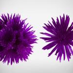 anastasia purple